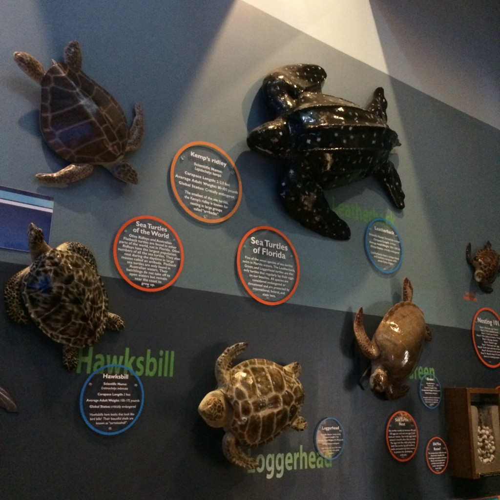 Display of turtles found in Florida