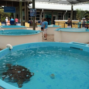 Each turtle had their own pool.