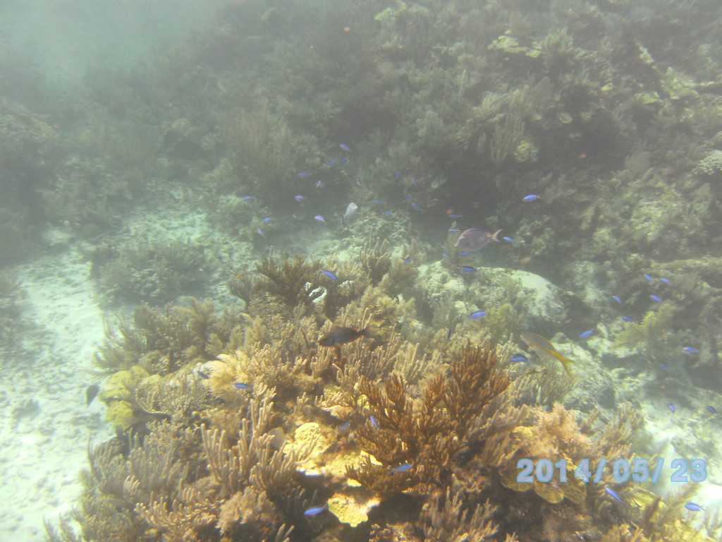 Lots of juvenile fishes