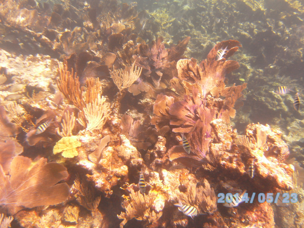 A healthy reef in the foreground, with a dead reef that looks like rock,in the background