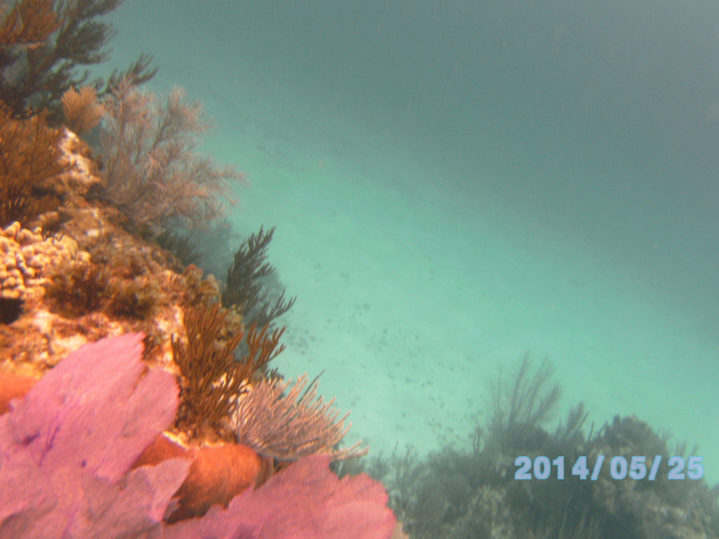 This was Gary's favorite reef with a ledge around it falling into water 20-30 feet deep.